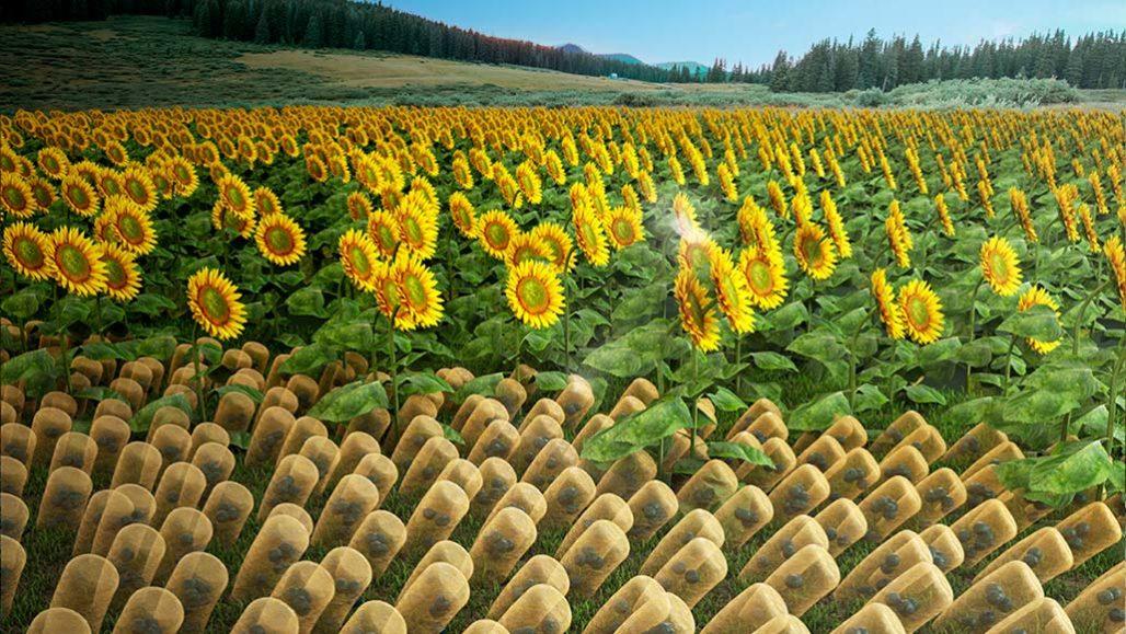 Искусственные подсолнухи могут собирать до 90% солнечной энергии