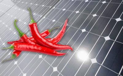 Перець чилі підвищує ефективність сонячних батарей