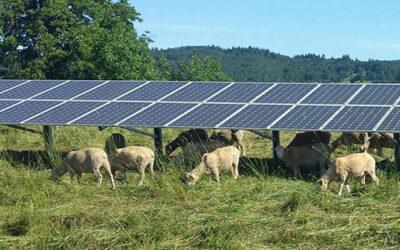 Португалія виділяє фермерам 10 млн євро на будівництво сонячних станцій