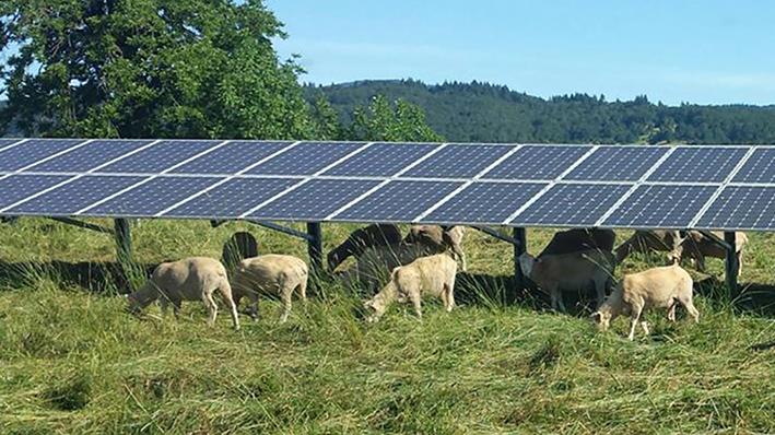 Португалия выделяет фермерам 10 млн евро на строительство солнечных станций
